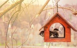 Sparrows In Wooden Feeding Trough. Are For Birds. Handmade Birdhouse. Royalty Free Stock Photos