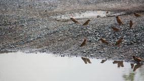 Sparrows and living with humans stock photos