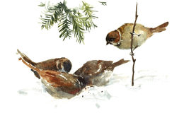 Sparrows pecking the Crumbs Watercolor Bird Illustration Hand Drawn Stock Photos