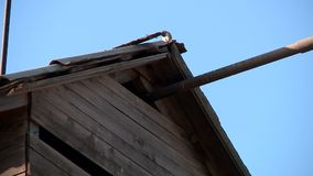 Sparrows and doves pecking grain. Sparrows and pigeons pecking the grain in zernotok in farms warehouse stock footage