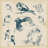 Sparrows retro collection vector Royalty Free Stock Photo