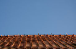 Sparrows on the roof. Sparrows on the top of the roof, red tiles stock image
