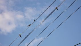 Sparrows sit on electric cables. Blue sky with clouds stock video footage