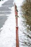 Sparrows sit on a fence. Snowy winter. royalty free stock photos