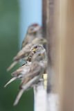 Sparrows sitting on the balcony Stock Image