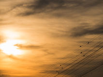 Sparrows Stand on an Oblique Wire. Behind The Sun Royalty Free Stock Photos