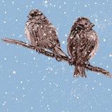 Sparrows on a tree branch Stock Photos