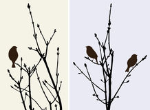 Sparrows on the tree branches Stock Photo