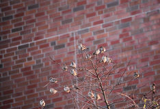 Sparrows In A Tree Stock Photography