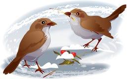 sparrows två vektor illustrationer