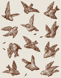 Sparrows. Vector drawing of a flock of the fighting sparrows Royalty Free Stock Image