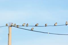sparrowstelefontrådar Royaltyfria Bilder