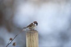 sparrowtree Arkivfoto