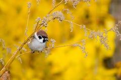 sparrowtree fotografering för bildbyråer