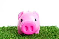 Sparschwein auf grünem Gras Stockfotos