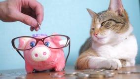 Sparschwein- und Katzenteamwork-lustige Videogeldkonzept-Finanzgeschäftsbuchhaltung Geldkatzenbuchhalter-Finanzierhaustier stock footage