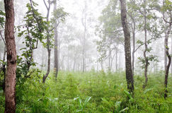 Sparse forest Stock Photos
