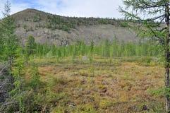 Sparse mountain taiga in Yakutia. Stock Images