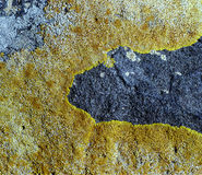 Sparse vegetation on a rock in green and blue Royalty Free Stock Image