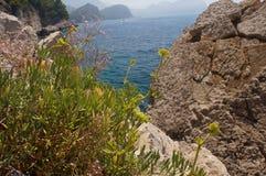 Sparse vegetation rocks, flora and fauna,macro Royalty Free Stock Photo