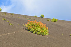 Sparse vegetation on volcanic hills Stock Photo