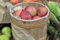 Spartan Apples Royalty Free Stock Photos
