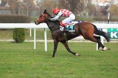 Spartan spirit - horse racing in Prague Stock Image