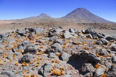 Spartan volcanic landscape of the Atacama Desert. An arid and remote high plateau of rock, mountains and sand in Chile near the Bolivia border, South America stock image