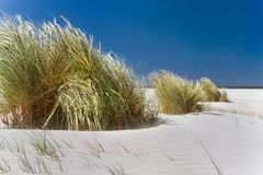 Sparto pungente su una spiaggia Fotografia Stock