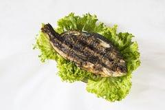 Sparus aurata arrostito con insalata verde su fondo bianco Fotografie Stock