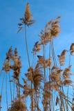 Sparv i busksnåren av vasser royaltyfria foton