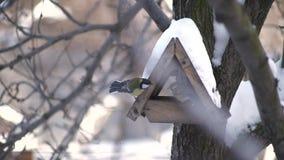 Sparvar flyger till fågelförlagemataren i vinter lager videofilmer
