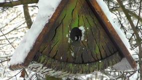 Sparvar och mesar flyger in i en fågelförlagematare i vinter arkivfilmer