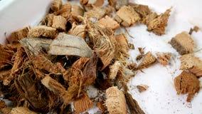 spathe Peau de noix de coco d'un plat blanc Photo stock