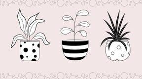 Spathiphyllum fikus och dracaena i blomkrukor royaltyfri illustrationer