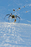 Spatial Spider Stock Image