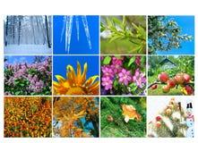 Spatie met twaalf gekleurde beelden van aard voor kalender Stock Afbeelding