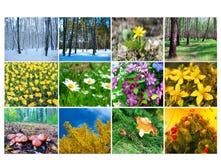 Spatie met twaalf gekleurde beelden van aard voor kalender Royalty-vrije Stock Foto's