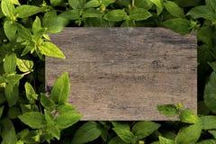 Spatie van de model de houten plank op groene bladeren Creatieve lay-out met stock foto's