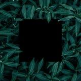 Spatie voor de reclame van kaart of uitnodiging Zwart frame Royalty-vrije Stock Foto