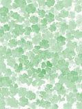 Spatie voor St Patrick ` s Dag: Veel klaver een groene kleur van klaverbloemblaadjes op een witte achtergrond Stock Fotografie