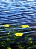 Spatter-док на пруде, Gatchina Стоковое Фото
