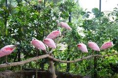 Spatule rose Photo stock