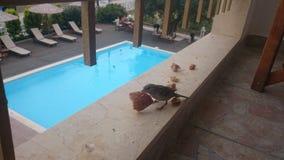 Spatz auf einem Balkon durch ein Pool Stockbilder