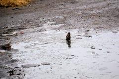 Spatz baden in einem kalten Pool des Eises Frühling Lizenzfreie Stockfotografie