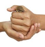 Spatz in der Frauenhand Lizenzfreies Stockfoto