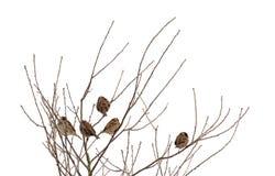Spatzen auf gefrorenem Baum Stockfoto