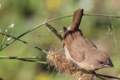 Spatzenvogel im Baum Stockbild