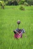 Spaventapasseri del giacimento del riso in Ubud, Bali, Indonesia Fotografia Stock Libera da Diritti