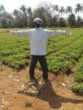 Spaventapasseri nel campo dei legumi immagine stock libera da diritti